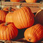 October Calendar and Newsletter